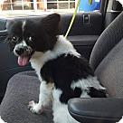 Adopt A Pet :: Miss Wisp