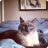 Adopt A Pet :: Emery - Alhambra, CA
