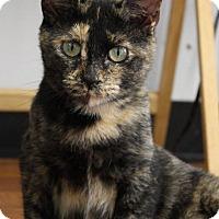 Adopt A Pet :: Reeses - Joplin, MO
