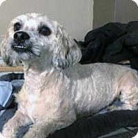 Adopt A Pet :: Tucker - Wilton, NY