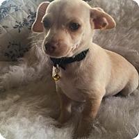 Adopt A Pet :: Cannoli - Fresno, CA