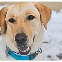 Adopt A Pet :: Ola - Broomfield, CO