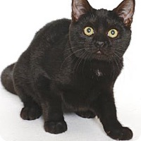 Adopt A Pet :: PEMBROKE - Gloucester, VA