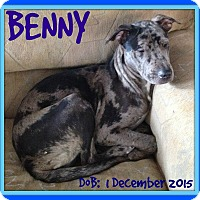 Adopt A Pet :: BENNY - Middletown, CT