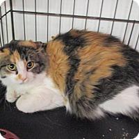 Adopt A Pet :: Alaska - Reeds Spring, MO