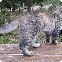 Adopt A Pet :: Griz - Fischer, TX