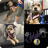 Adopt A Pet :: Selah - Las Vegas, NV