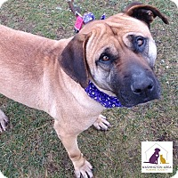 Adopt A Pet :: Myra - Eighty Four, PA