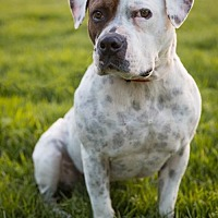 Adopt A Pet :: Peter Pan - Richmond, CA