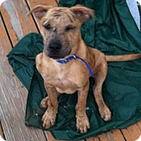 Adopt A Pet :: Colby - Clay, NY