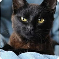 Adopt A Pet :: Charm - Columbus, OH