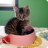 Adopt A Pet :: Tigger - Xenia, OH