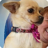 Adopt A Pet :: Cookie - Encinitas, CA