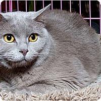 Adopt A Pet :: Violet D - Sacramento, CA
