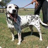 Adopt A Pet :: Mickey - Newcastle, OK