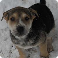 Adopt A Pet :: Christi - dewey, AZ