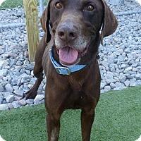 Adopt A Pet :: Shooter - Falls Church, VA