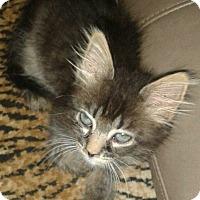 Adopt A Pet :: Cory - Whittier, CA