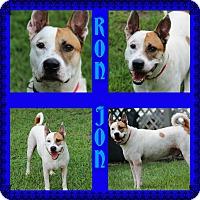 Adopt A Pet :: Ron Jon - Tampa, FL