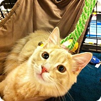 Adopt A Pet :: Dusty - Watkinsville, GA