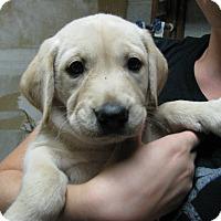 Adopt A Pet :: Luna - Bowie, MD