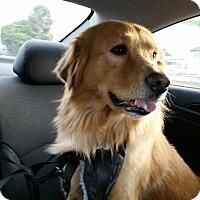 Adopt A Pet :: Buster - Murdock, FL