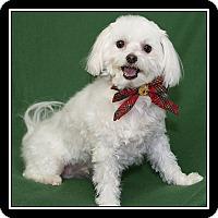 Adopt A Pet :: Twinkie - San Diego, CA