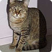 Adopt A Pet :: Louis - Englewood, FL