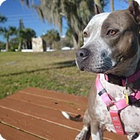 Adopt A Pet :: Madeline - New Port Richey, FL