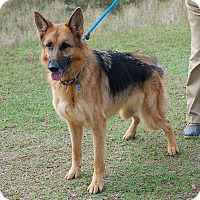 Adopt A Pet :: Duchess AD 01-23-16 - Preston, CT