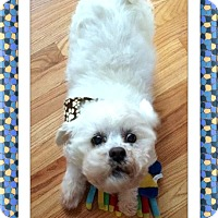 Adopt A Pet :: Pending!! Abercrombie - IL - Tulsa, OK