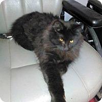 Adopt A Pet :: Sparky - Germantown, MD