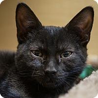 Adopt A Pet :: Tabitha - Albany, NY