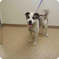 Adopt A Pet :: RIGBY - Palmer, AK