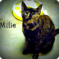 Adopt A Pet :: Millie - Defiance, OH