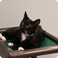 Adopt A Pet :: Stachwayne - Byron Center, MI