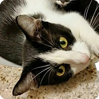 Adopt A Pet :: Enchantress - East Brunswick, NJ