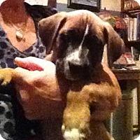 Adopt A Pet :: Dempsey - Memphis, TN