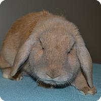 Adopt A Pet :: Alex - Michigan City, IN