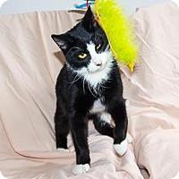 Adopt A Pet :: Journey - Janesville, WI