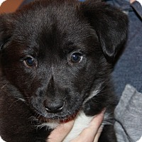 Adopt A Pet :: Fettuccine - Phoenix, AZ