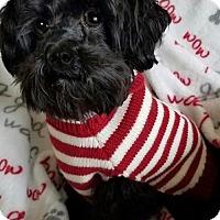 Adopt A Pet :: Dacota - Sinking Spring, PA