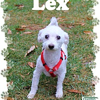 Adopt A Pet :: Lex - Fallston, MD