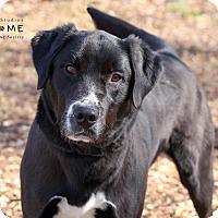 Adopt A Pet :: Buck - Edwardsville, IL