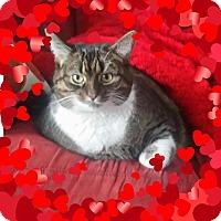 Adopt A Pet :: Pepper - Cedar Springs, MI