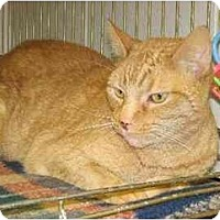 Adopt A Pet :: Joey - Fremont, MI