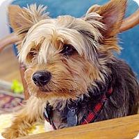 Adopt A Pet :: Gizmo - Homewood, AL
