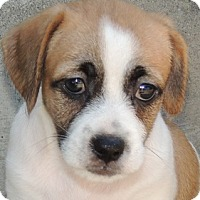 Adopt A Pet :: Bartholomew - La Habra Heights, CA