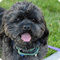 Adopt A Pet :: Champ - Mission Viejo, CA