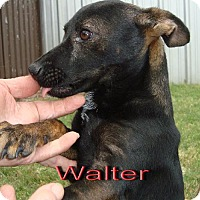 Terrier (Unknown Type, Medium) Mix Dog for adoption in Coleman, Texas - Walter